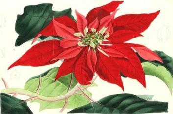 La Stella Di Natale Poesia.Poesia Di Natale Di Dina Mc Arthur Rebucci Vieni Santa Lucia