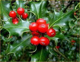 Poesia La Stella Di Natale.Piante Natalizie Poesie Reportonline It