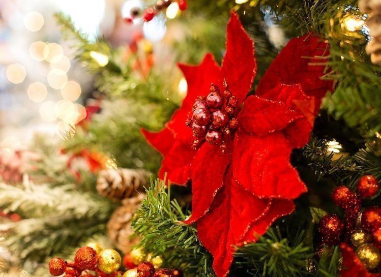 La Stella Di Natale Poesia.Poesie Di Natale Per Bambini Poesie Reportonline It