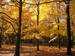 racconto sull 39 autunno di r salten cadono le foglie